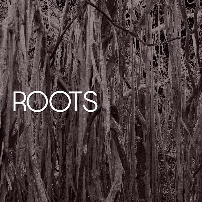 "HAVYN – ""Roots"" artwork"