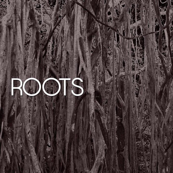 "HAVYN – ""Roots"" artwork"