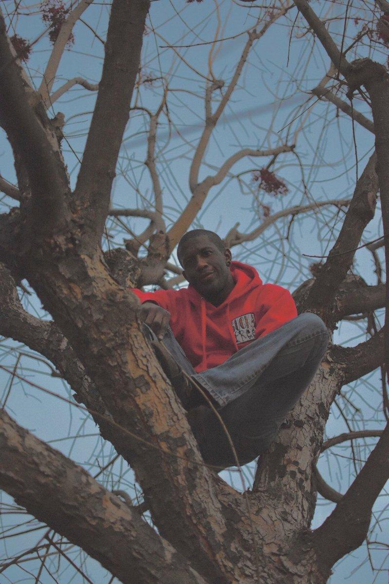 Mally press photo in a tree